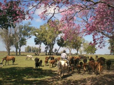 Pferde in Trenque Lauquen