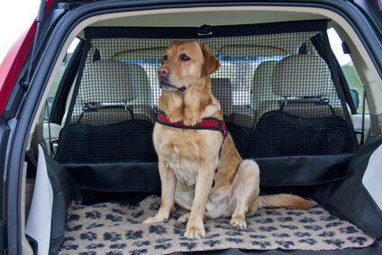 mietwagen mit hund. Black Bedroom Furniture Sets. Home Design Ideas